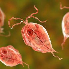 690 câu trắc nghiệm Ký sinh trùng
